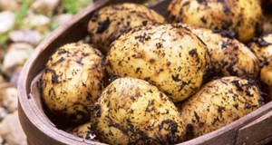 The humble spud is so ubiquitous that we never question its value, but according to Fiann O'Nualláin, it has a long list of healthy, nutritious properties that not only feeds the body, but also helps to heal head and heart.