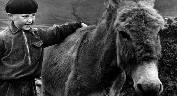 Gearóid and his pet donkey in Dunquin in the 1950s