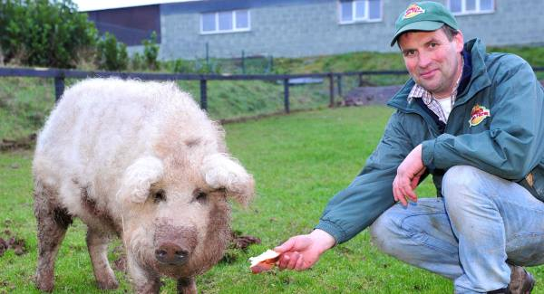 Ivan Rumley with Sophie the Mangalitsa, a rare woolly pig, at Rumley's Open Farm, Liberty Hill, Waterfall, Co Cork.