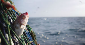 €2.7m in grants for seafood processors