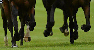 Quiz: Can you tell an Aintree Grand National horse from a Booker Prize nominee?