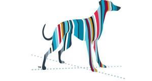 Irish Greyhound Board appoints new chief executive
