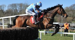 NEW PLAN: Turban heads back over hurdles this weekend after falling in a chase at Tramore.