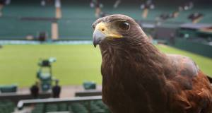 Hawk-Eye is a complex computer system. It has been accepted by many governing bodies (e.g tennis, cricket and association football) as a technological means of adjudication.