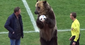 Animal rights group condemns 'inhumane' treatment of bear at Russia football game