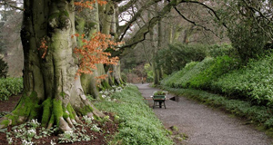 Altamont gardens, Carlow gearing up for snowdrop week this month coming. It is one of many gardens about to unveil a natural tapestry of flowers when the bulbs awakens from their winter slumber.