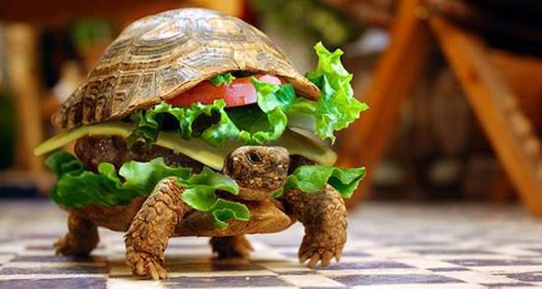 A light-hearted image from flickr created by 'Flaunted' after a man attempted to smuggle his turtle as a burger.